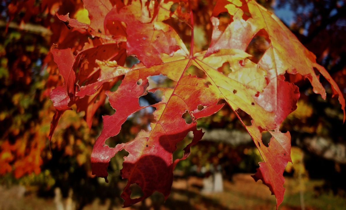 2012-10-20 at 09-03-18 autumn decay fall leaves nature red trees yellow.jpg