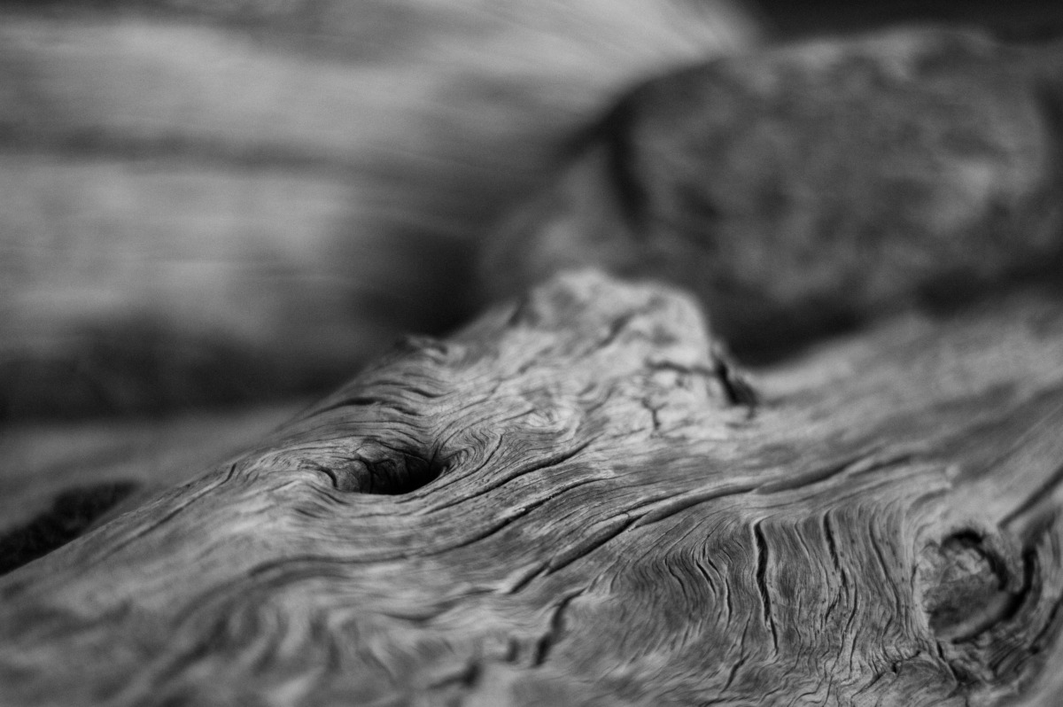 2009-07-04 at 08-44-44 log, weather, age, wood, silver, driftwood.jpg