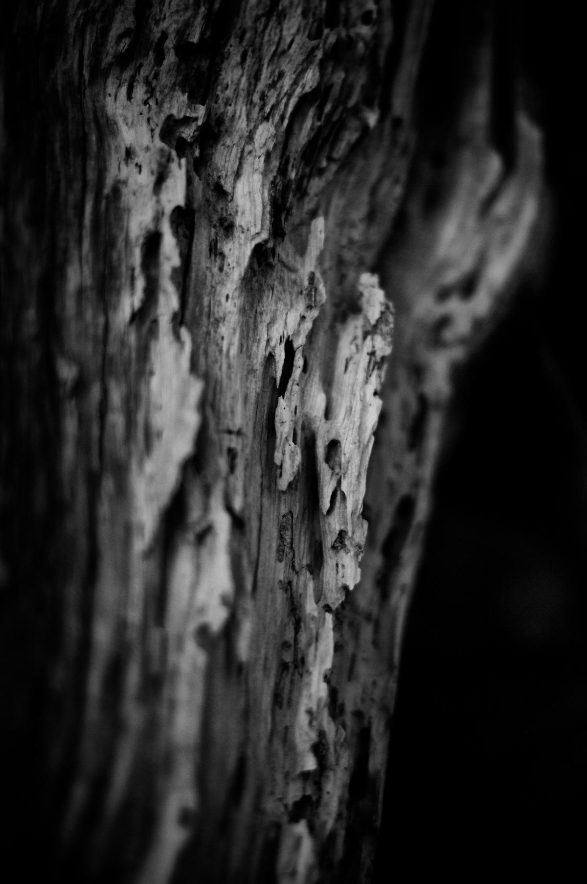 2009-07-04 at 08-42-41 dark death decay hiking juan de fuca ominous still life wood.jpg