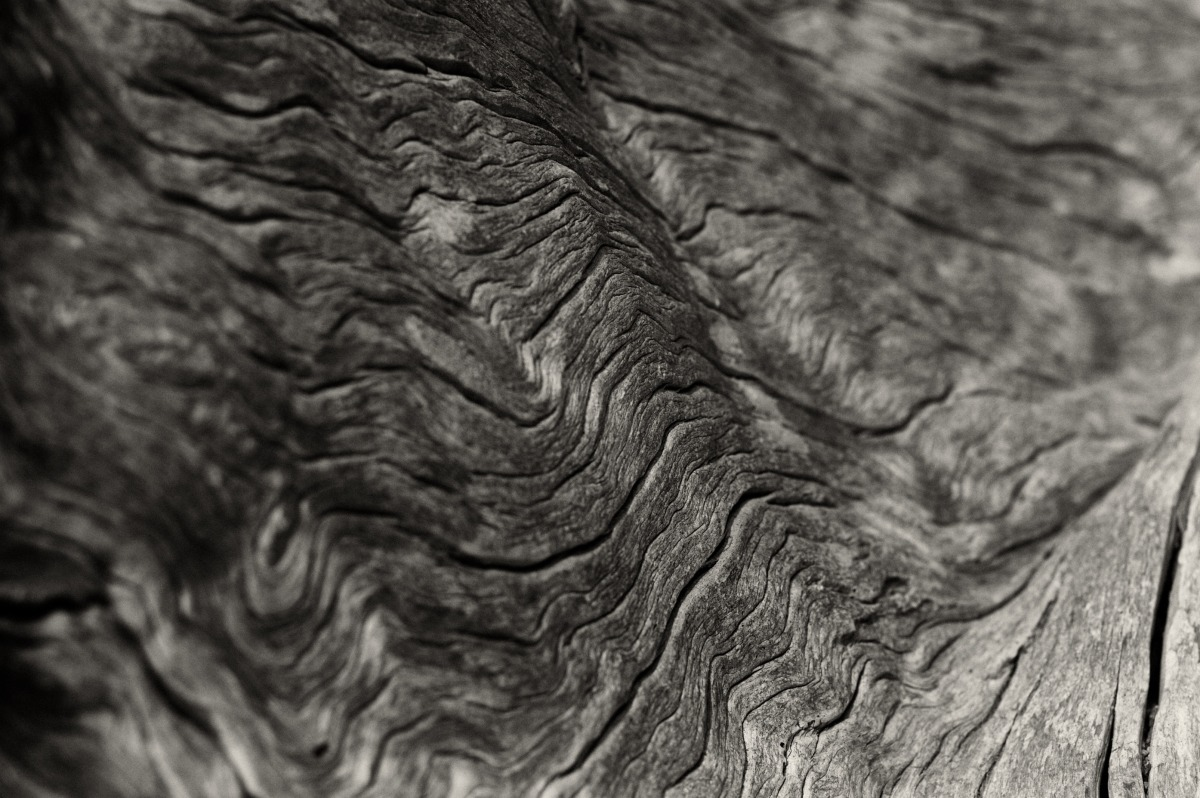 2009-07-04 at 06-28-57 black  white drift wood grain hiking juan de fuca still life weathered wood.jpg