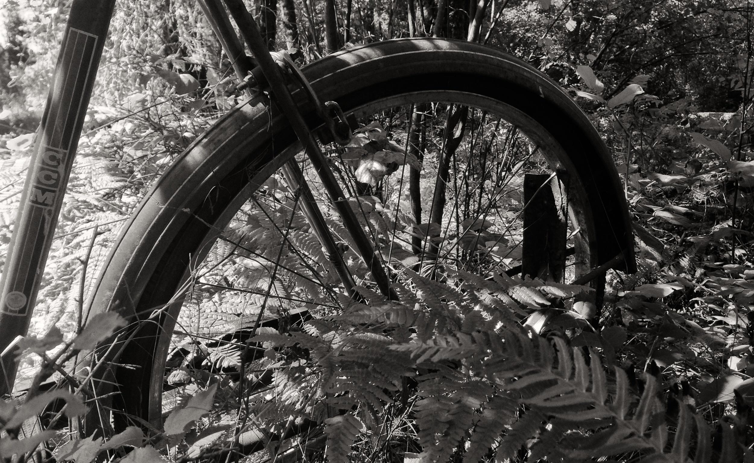 IMG_1805 Bike, CCM, Overgrown, Forest, Ferns, Black & White.jpg