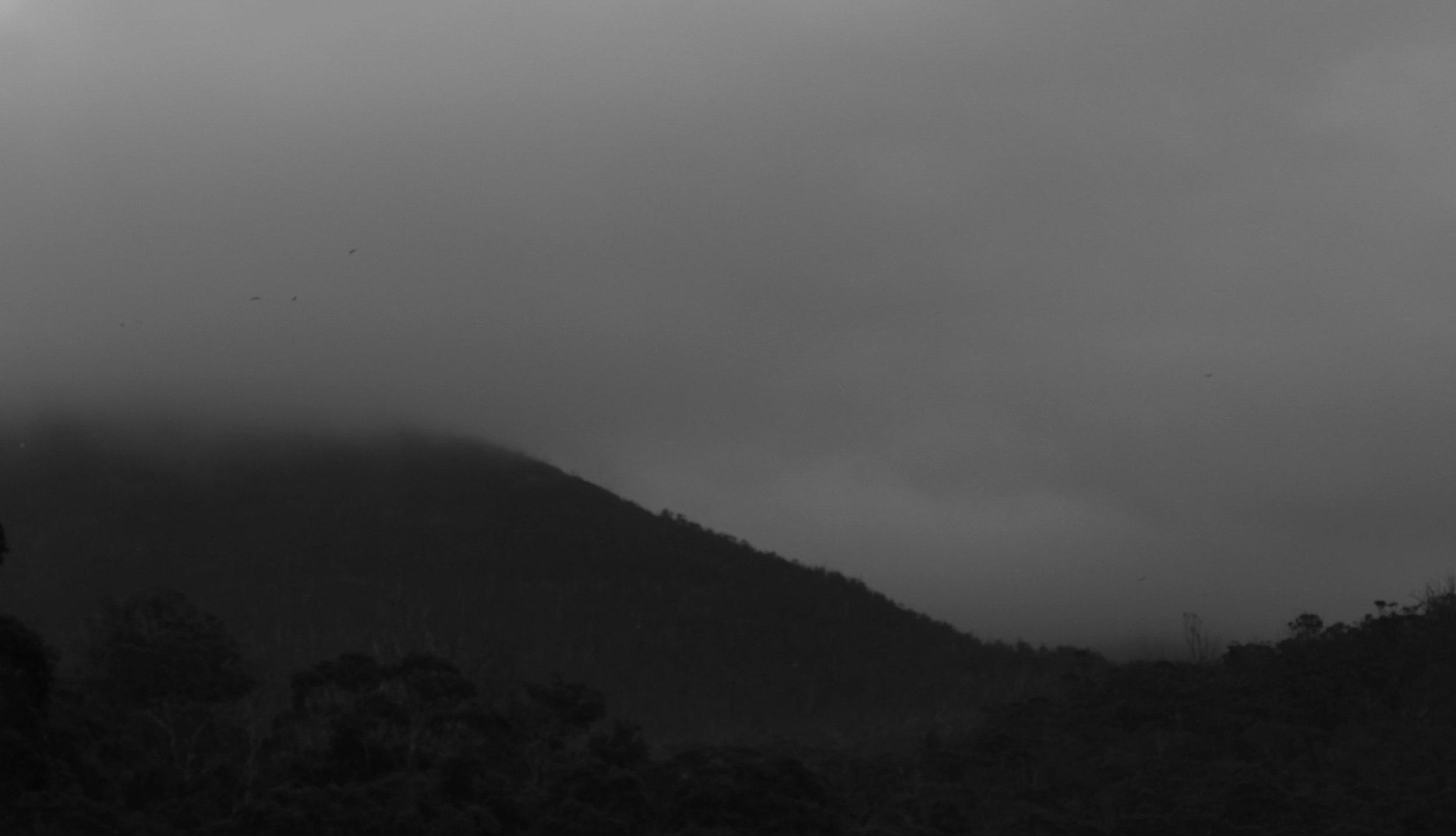 dark_wellington.jpg