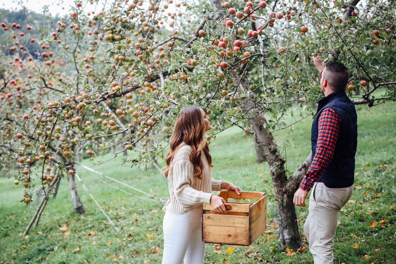apple orchard engagement shoot vermont-4.jpg