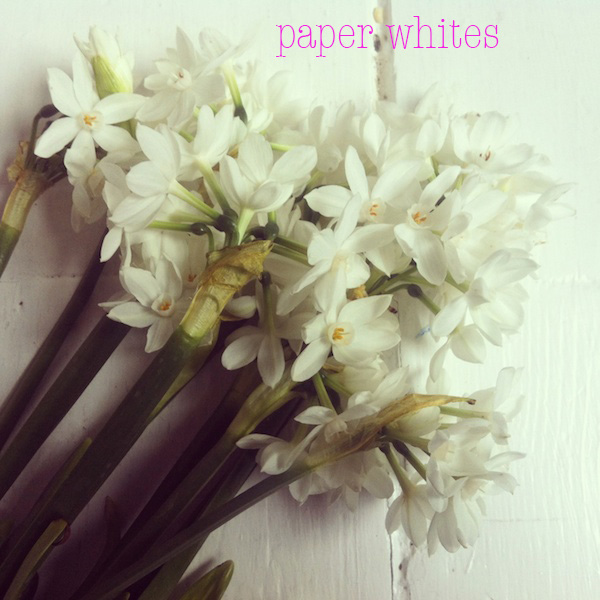 paperwhites.jpg