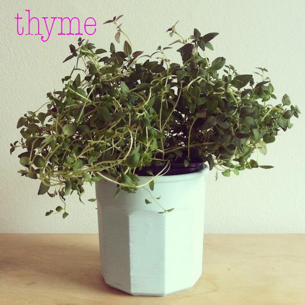 thyme.jpg