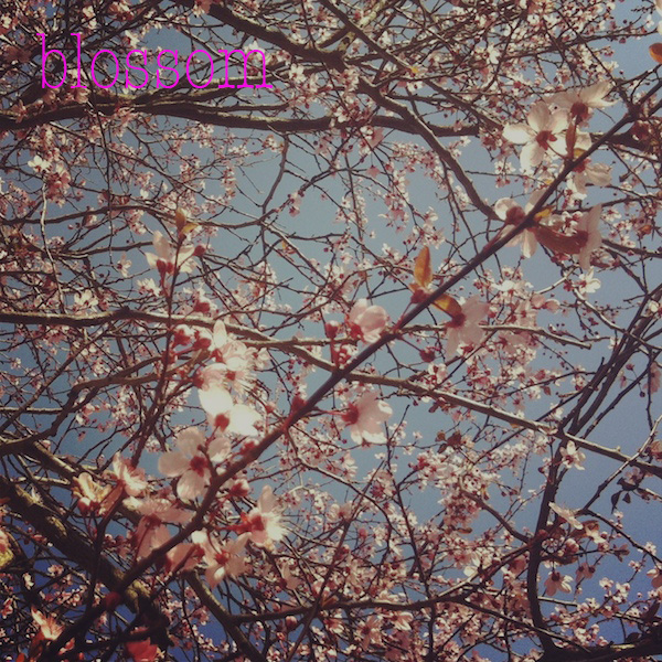 blossom03.jpg