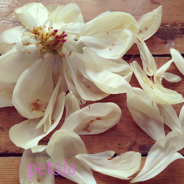 petals02.jpg