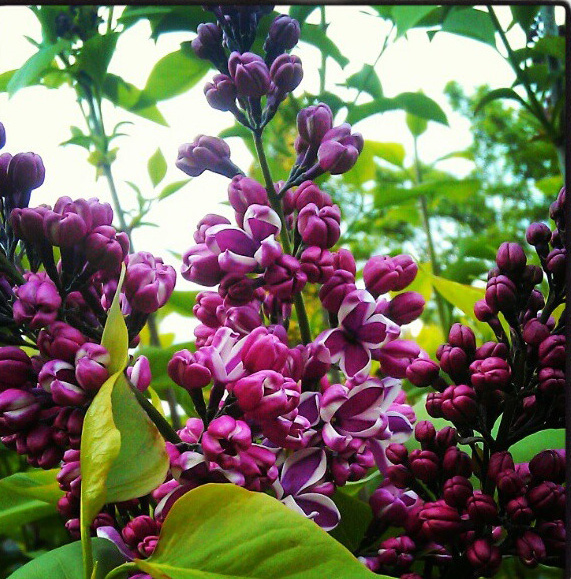 floralfriday 014.jpg