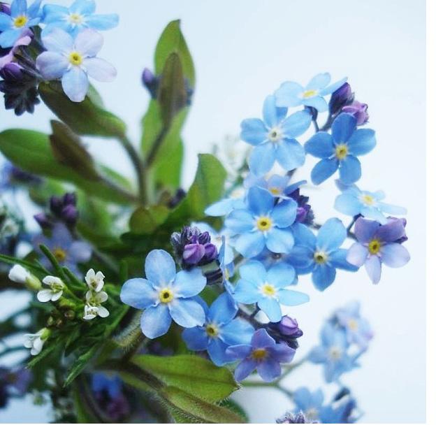 floralfriday 015.jpg