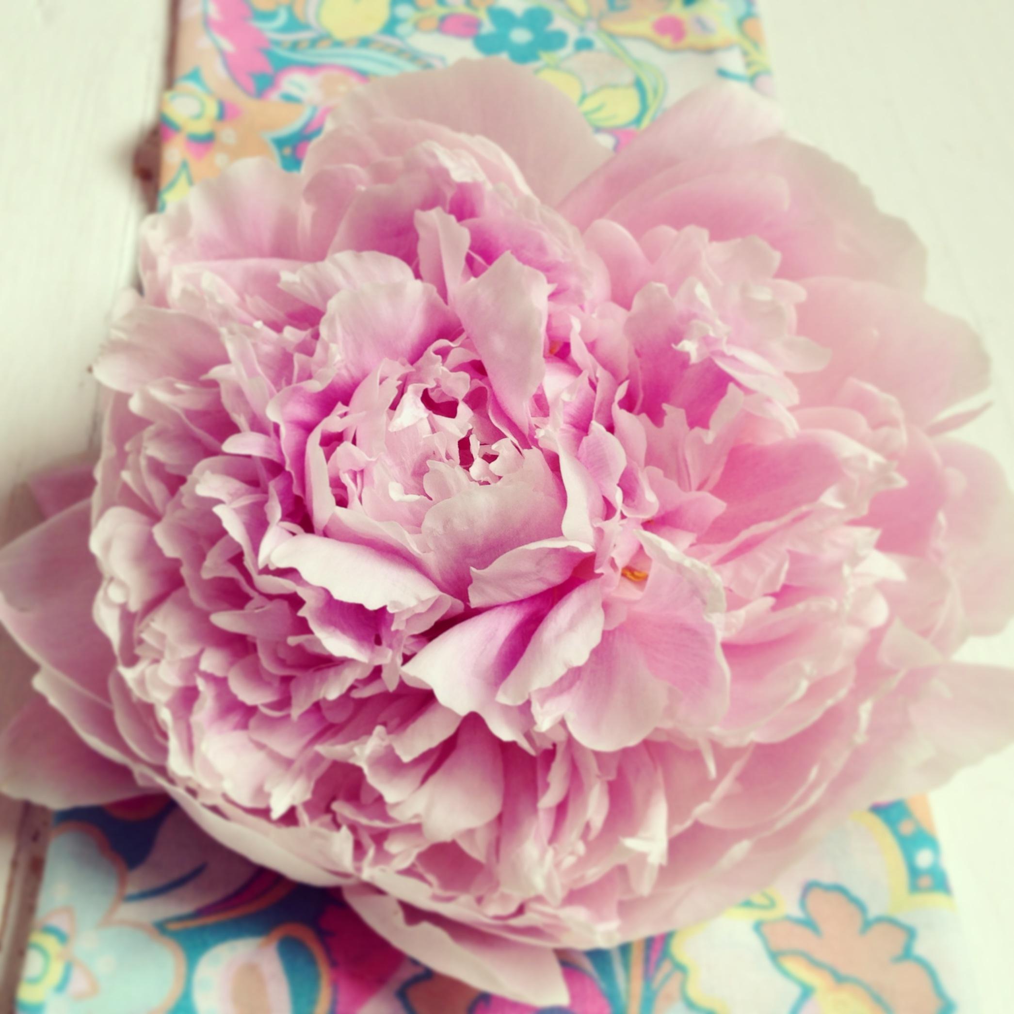 floralfriday 056 (1).jpg