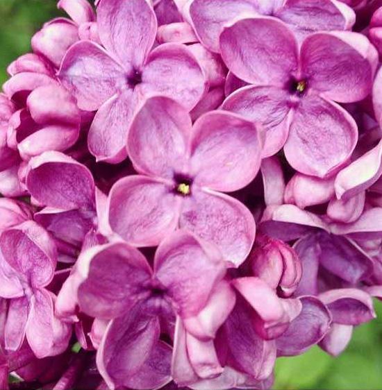 floralfriday 058 (1).jpg