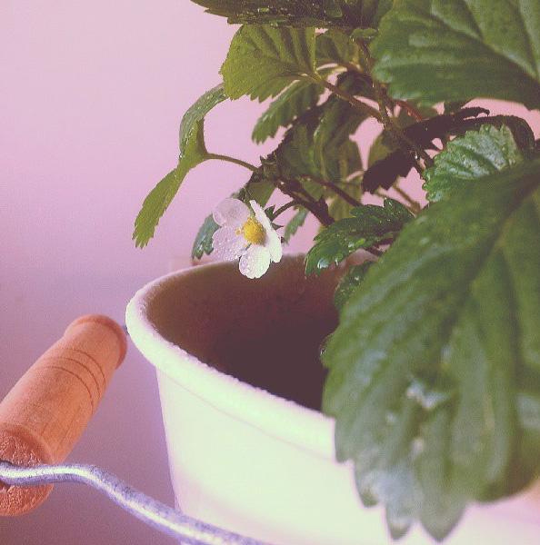 floralfriday 062 (1).jpg