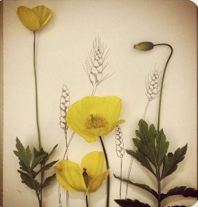 floraljune 007.jpg
