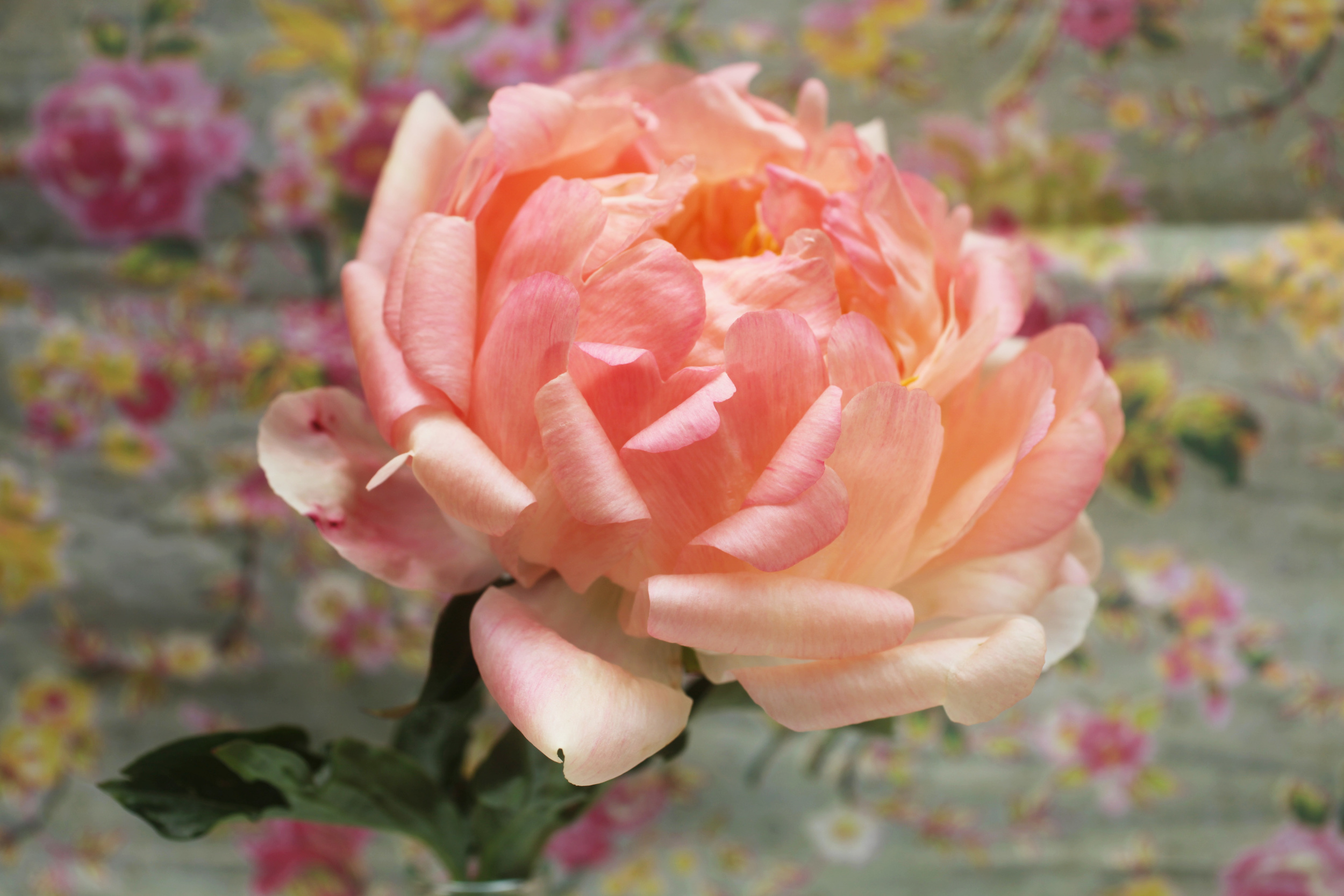 floralfriday 044.jpg