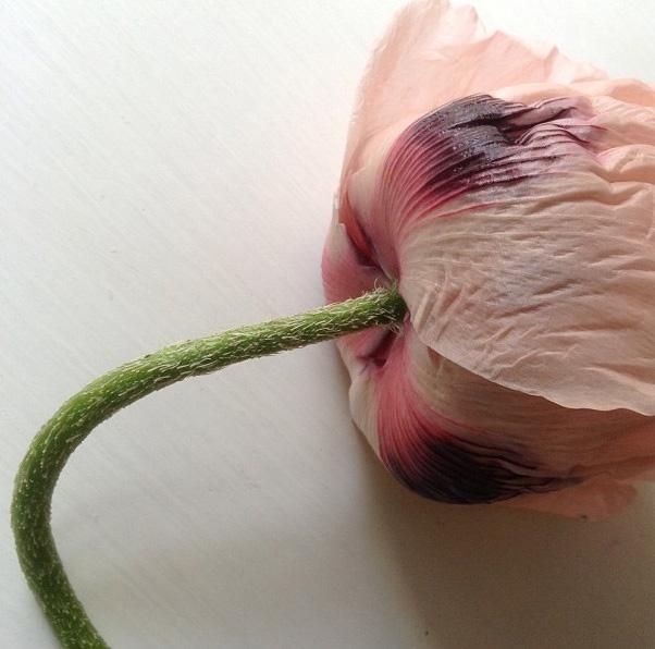 floralfridayjune21 007.jpg