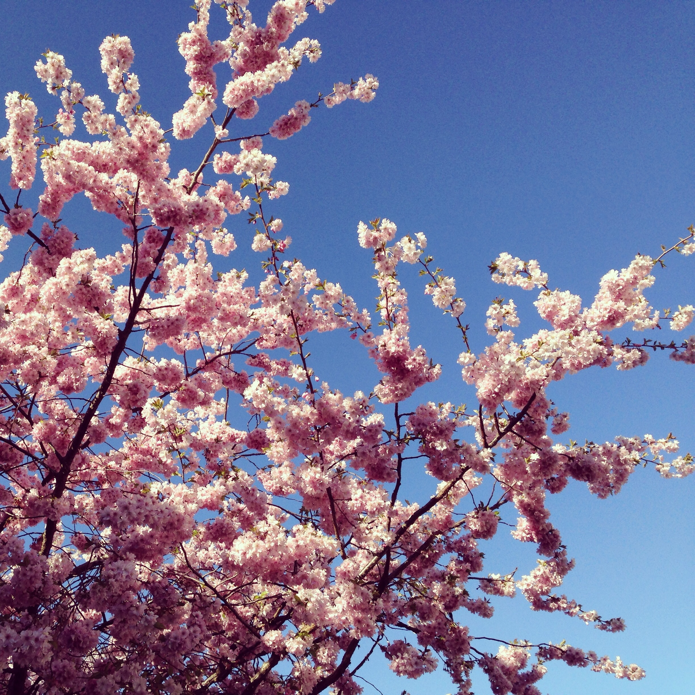 blossom 003.jpg