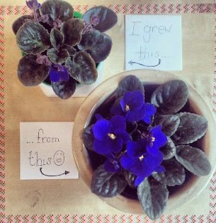 floralfridaycompetition 015.jpg