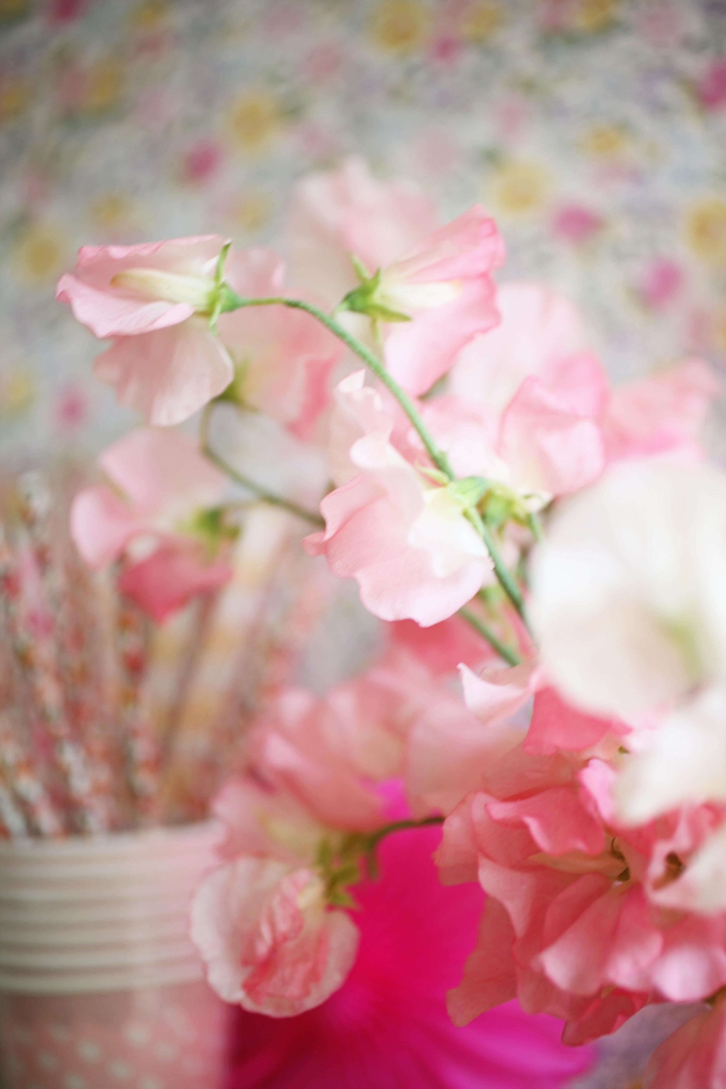 sweetpeas02.jpg