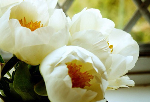 floralfriday2607 010.jpg