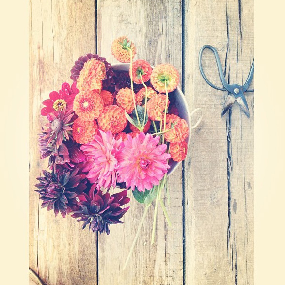 floralfridayaugust 023.jpg