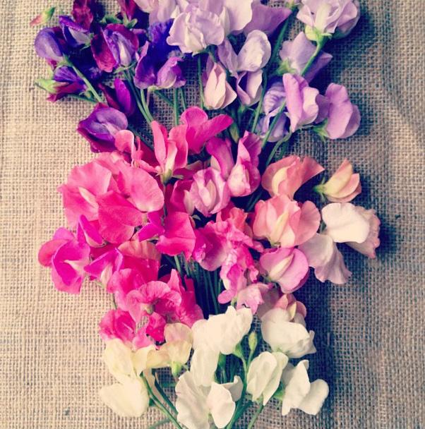 floralfridayaugust 034.jpg