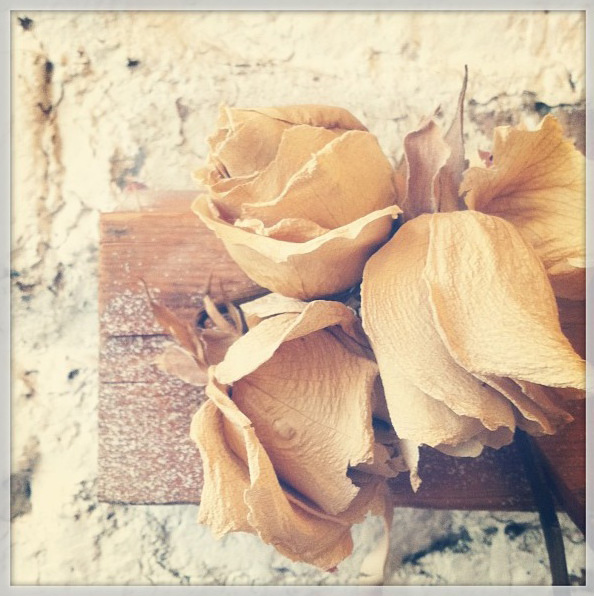 floralfridayaugust 038.jpg