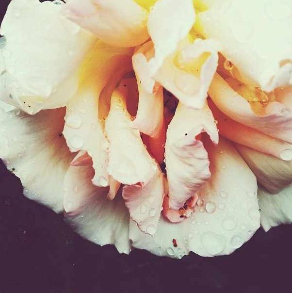floralfridayaugust 046.jpg