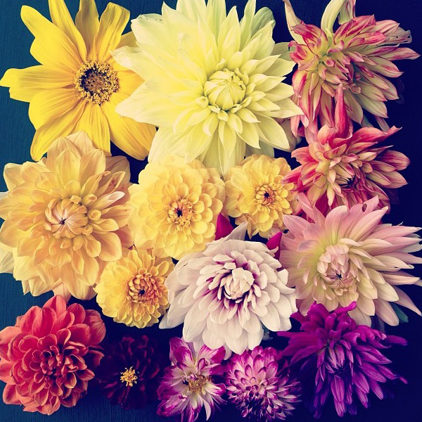 floralfridayseptember 013.jpg