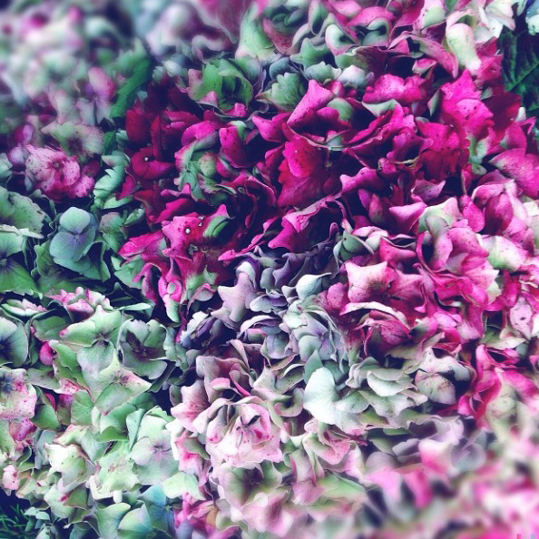 floralfridayoctober 005.jpg