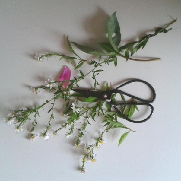 floralfridayoctober 001.jpg