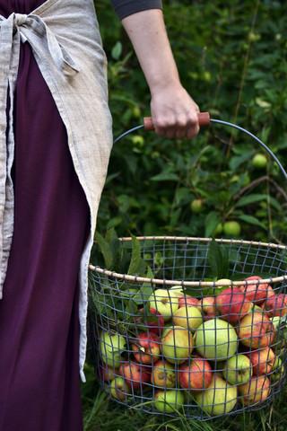 apple_basket_38_Decorator_s_Notebook_large.jpg