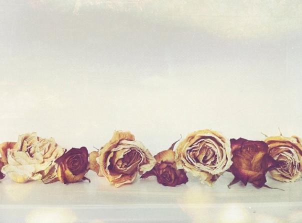 FloralFriday026.jpg