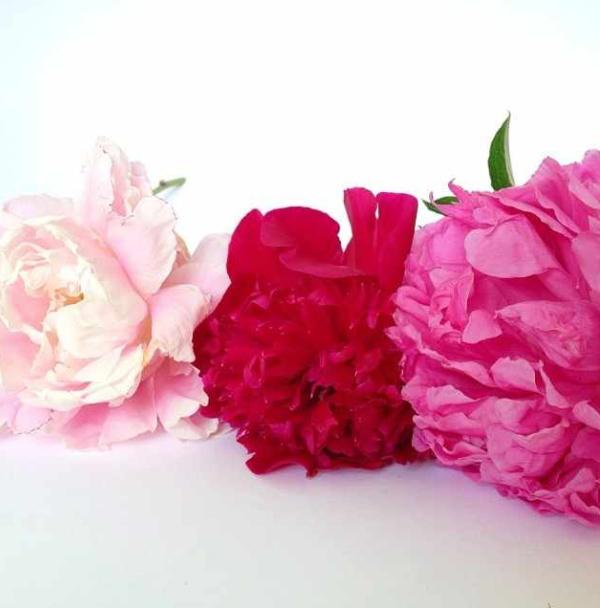FloralFridayNovember 039.jpg