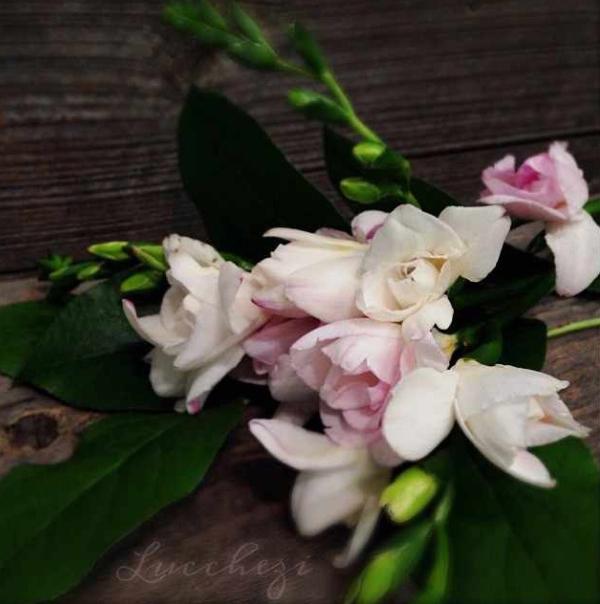 FloralFridayNovember 040.jpg