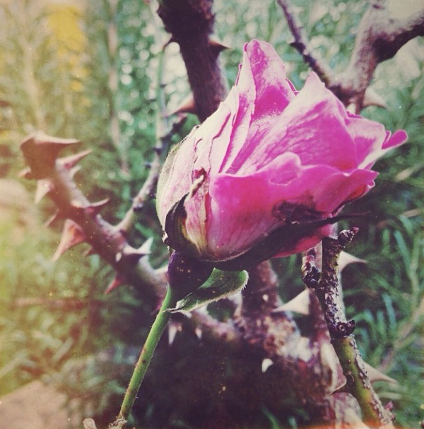 FloralFridayDecember 009.jpg