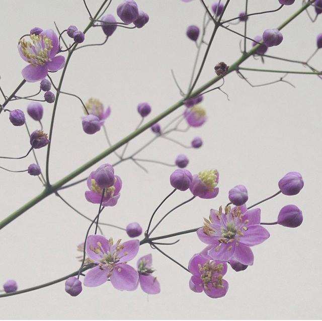 floraljan 002.jpg