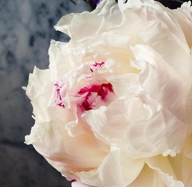 floraljan 003.jpg