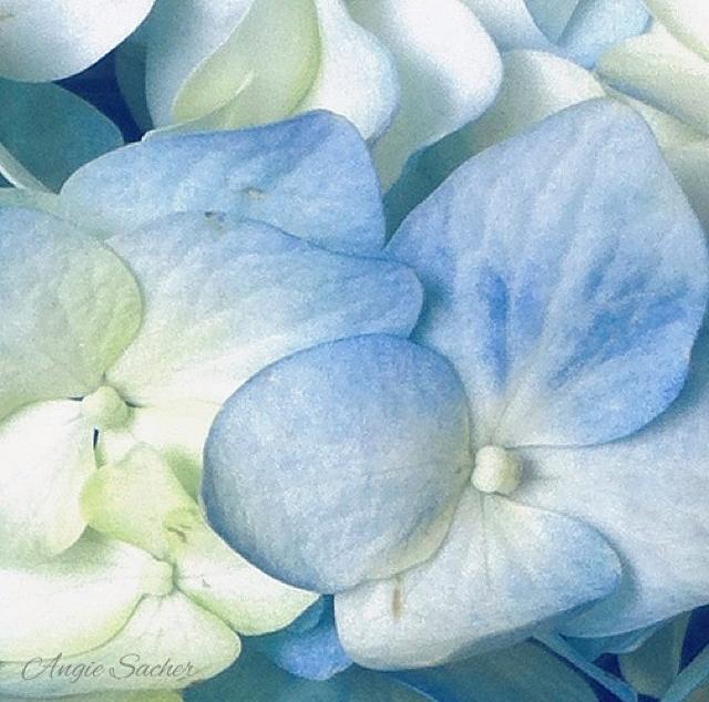 floraljan 031.jpg