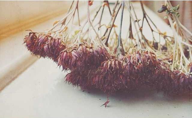 floraljan 83.jpg