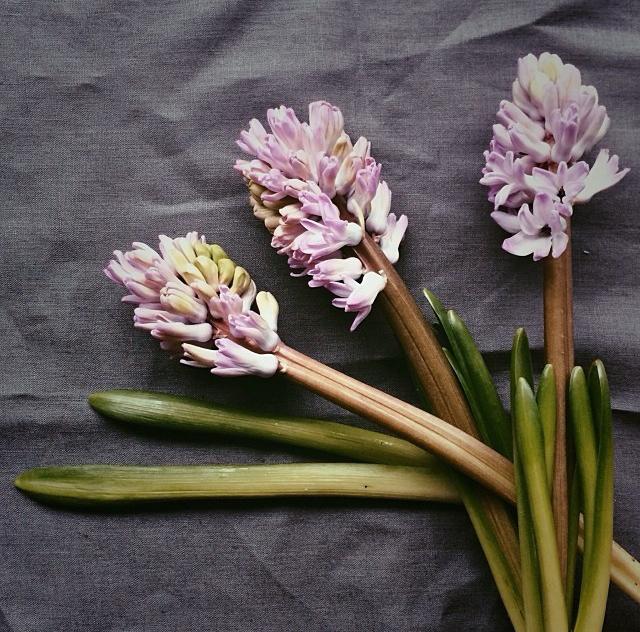 floraljan 84.jpg
