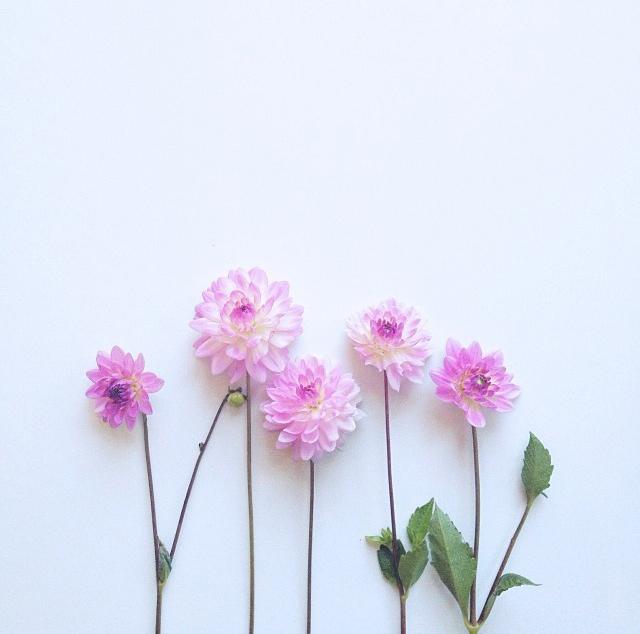 floraljan 88.jpg