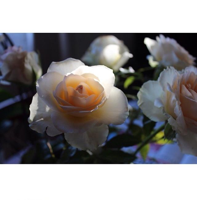 floraljan 93.jpg