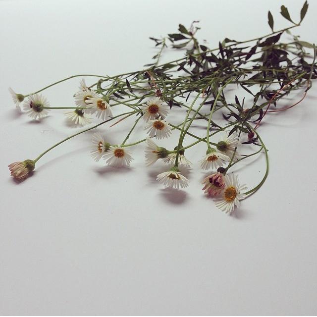 floraljan 92.jpg