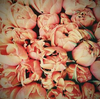 FloralFridayMay 116.jpg
