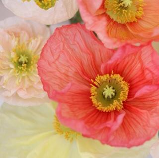 FloralFridayMay 117.jpg