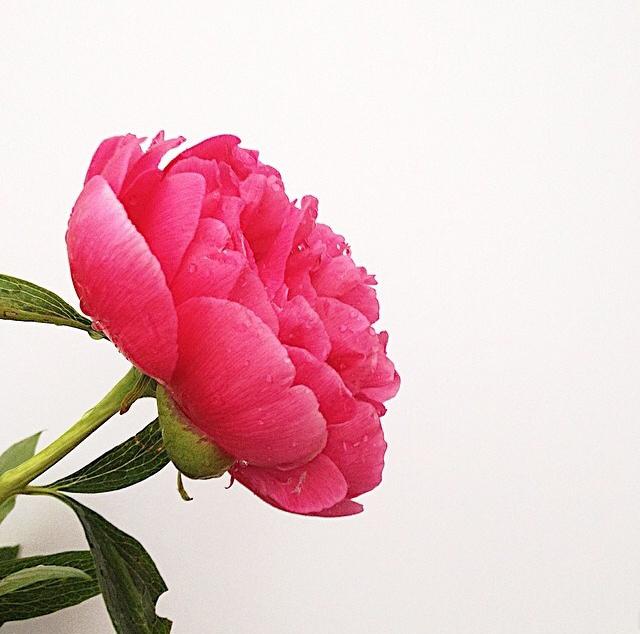 FloralMay 148.jpg