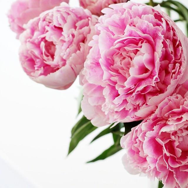 FloralFridayJune 20.jpg