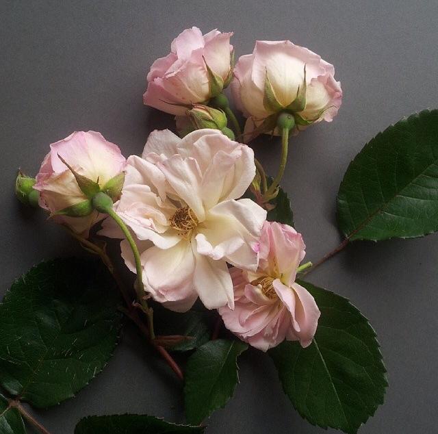 FloralFridayJune 19.jpg