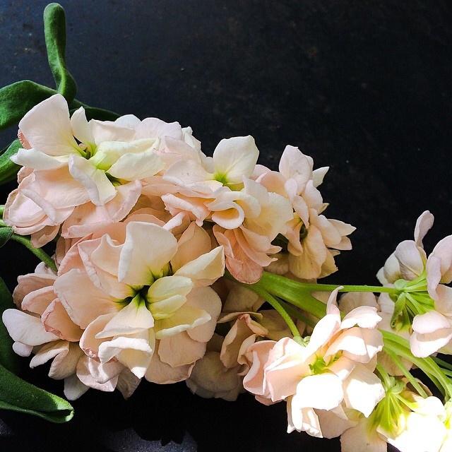FloralFridayJune 28.jpg