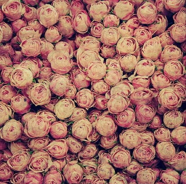 FloralFridayJune 29.jpg